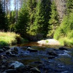 There are plenty of small streams in Sumava mountains forrests. Chilren love it! You can have pick-nick on the grass.