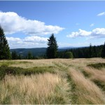 This is typical Sumava mountain meadow. One of the reason why we stay here. On the meadows as well as in the forrest you will find blueberries.