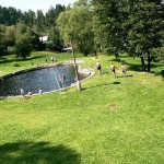 Natural pool is only 300m from our house. It´s filled with the water from the river Otava. There is nice buffet with en excellent czech beer. Open from mid May till mid September.